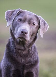 Hundepension Champion Dog, Niederdorf